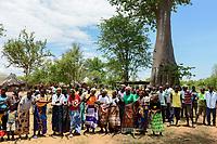 ZAMBIA, Sinazongwe, dancing Tonga women under Baobab tree