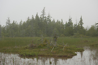 The fen at Singing Sands, near Tobermory, Ontario, on a foggy evening.