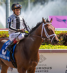 January 25, 2020: #3 Candy Tycoon with John Velazquez on board, breaks his maiden, during the Pegasus World Cup Invitational at Gulfstream Park Race Track in Hallandale Beach, Florida. Liz Lamont/Eclipse Sportswire/CSM