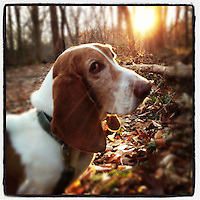 On a walk in the Wissahickon, Elwood basks in the afternoon sunlight on December 5, 2012.