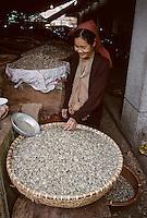 Asie/Vietnam/Hanoi: Le marché - Marchande de graines de tournesol