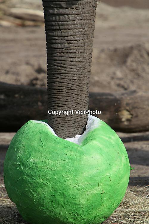 Foto: VidiPhoto..RHENEN - De olifanten van Ouwehands Dierenpark worden vrijdag verrast met enorme paaseieren met een doorsnee van 90 cm. De eieren, gemaakt  van papier-maché, zijn gevuld met hooi, noten en fruit. Het aanbieden van deze paaseieren is een vorm van verrijking door variatie aan te brengen in de wijze waarop voer wordt aangeboden. In dierentuintaal heet dat doe-voer.
