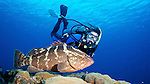 Diver and Nassau grouper, Little Cayman