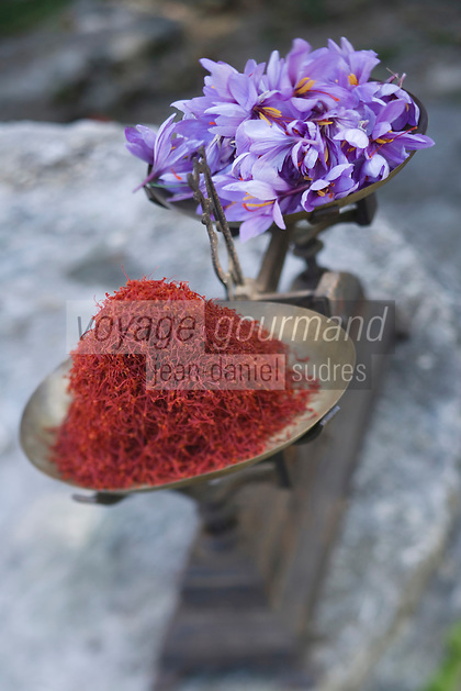 Europe/France/Midi-Pyrénées/46/Lot/Larnagol: Safran du Quercy en fait les stigmates des fleurs séchées et  fleurs de safran chez Madame Angé à Larnagol  //  France, Lot, Larnagol, at Madame Ange's, Quercy saffron, dried stigmas of Crocus sativus flowers where saffron is extracted