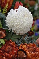 Chrysanthemum flower decorating grave site in cemetery, Appenzeller, Switzerland