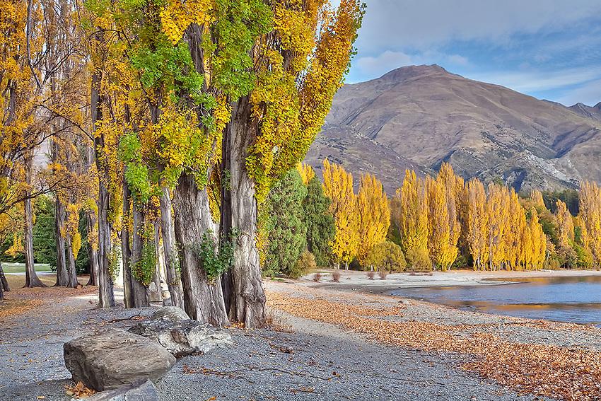 lake wanaka, autumn trees, poplar trees, yellow, lake, central otago, new zealand