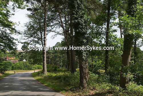 """St Georges Hill, Cobham near Weybridge Surrey Uk. Camp Hill Road where the Diggers in 1649 formed a settlement and who's agends was to the """"levelling of all estates"""" ie the abandonment of all property rights."""