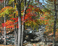 USA, Maine, Fall colors line Coos Canyon on the Swift River in Oxford County.