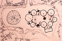 Africa:  African Adobe Architecture--Plan of a Konkomba Compound, Northern Ghana.  Labelle Paussin, ARCHITECTURE IN NORTHERN GHANA, 1969.  Each for a wife.