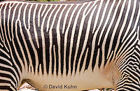 0608-1106  Grevy's Zebra (Imperial Zebra), Details of Stripes, Equus grevyi  © David Kuhn/Dwight Kuhn Photography