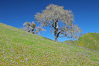Central Valley California Rolling Hills