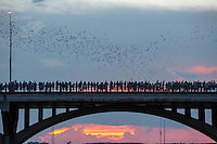 Austin is home to the largest urban colony of Mexican free-tailed bats in North America. Each night, from April to October, an estimated 1,500,000 bats emerge from underneath the Congress Avenue Bridge at sundown on their nightly search for food. Some quick bat facts:<br />