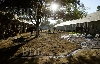 Oklahoma track, Saratoga. Saratoga Race Course, Saratoga Racetrack, beautiful horse racing, Thoroughbred racing, horse, equine, racehorse, morning mood