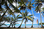 Beautiful Playa Bonita with palm trees and Hobie Cat, Las Terranas, Samana, Dominican Republic
