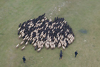 A flock of racka sheep moves on a field during a celebration of the end of the grazing season in the Great Hungarian Plains in Hortobagy, 200 km (124 miles) east of Budapest in Hortobagy, Hungary on Oct. 21, 2017. ATTILA VOLGYI
