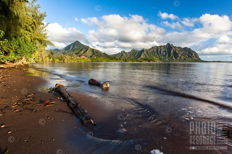 Driftwood along the shoreline of Kane'ohe Bay with the Ko'olau Mountains in the background, Waiahole Beach Park, O'ahu.