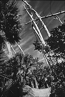 Crandon Park<br /> From &quot;The other Wind&quot; series. Key Biscayne, Florida, 2008