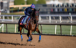 October 30, 2019: Breeders' Cup Turf entrant Mrs. Sippy, trained by H. Graham Motion, exercises in preparation for the Breeders' Cup World Championships at Santa Anita Park in Arcadia, California on October 30, 2019. Carolyn Simancik/Eclipse Sportswire/Breeders' Cup/CSM