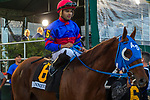 HALLANDALE BEACH, FL  JANUARY 27: #6 Gunnevara, ridden by Antonio Sano, in the post parade of the Pegasus World Cup Invitational, at Gulfstream Park Race Track on January 27, 2018,  in Hallandale Beach, Florida. (Photo by Casey Phillips/ Eclipse Sportswire/ Getty Images)