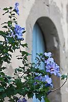 Europe/France/Provence-Alpes-Côte d'Azur/84/Vaucluse/Lubéron/Ménerbes: Détail de porte du village fleuri - labellisé Les Plus Beaux Villages de France