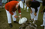 Swan Upping. The River Thames near Windsor Berkshire England. The Queens Swan Master checks the identification rings on the beak of the swan. 1980s