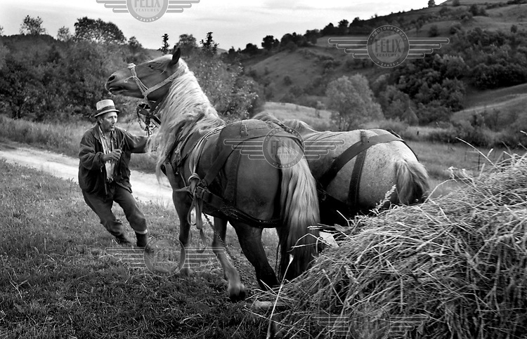 A peasant farmer struggles to control his horses, which he uses to help carry hay, Marmures.