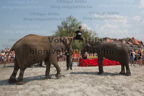 Rene Caselly Jr. of Germany makes a split standing on the heads of two circus elephants of the Caselly Family on a beach of lake Balaton in promotion of the Circus Night event at Balatonlelle (about 140 km South-West of capital city Budapest), Hungary on July 18, 2015. ATTILA VOLGYI