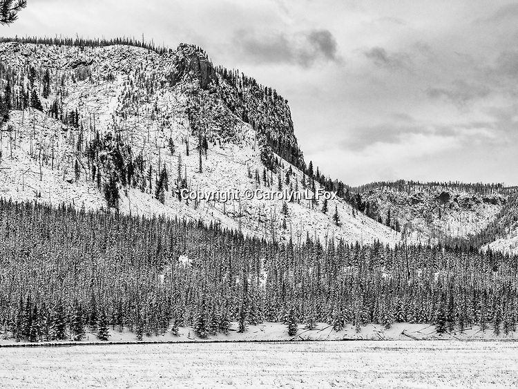 Yellowstone snow