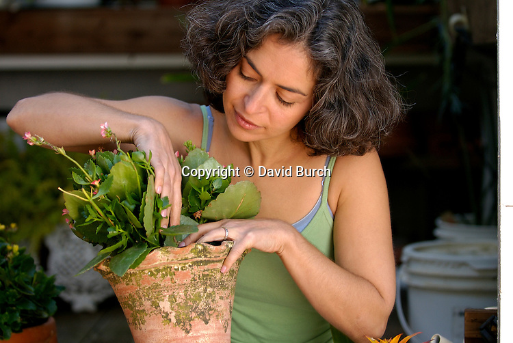 Mature woman potting a plant in greenhouse