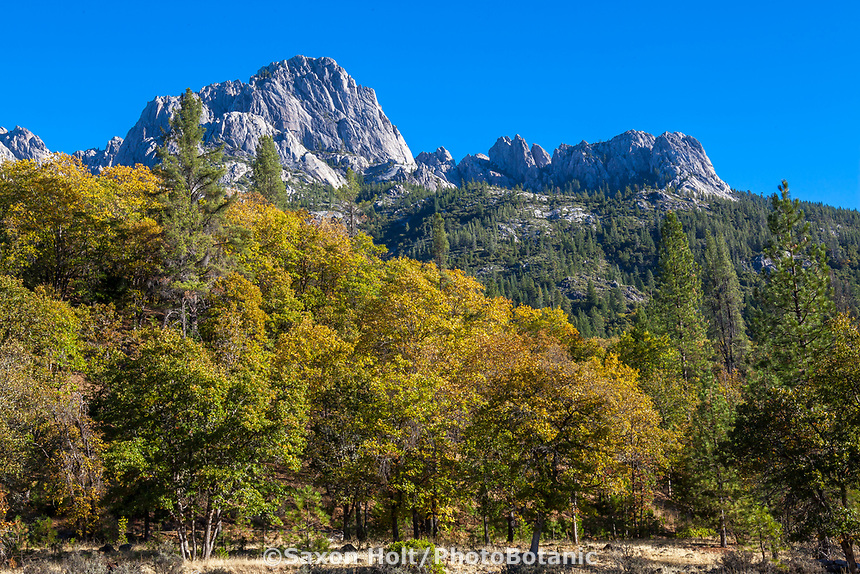 Autumn in mixed conifer forest and meadow under the mountains of Castle Crags State Park, Shasta-Trinity National Forest, California