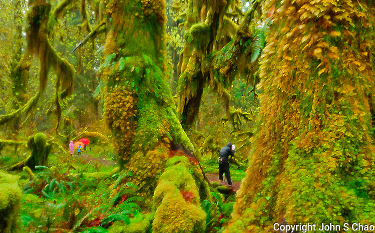 Photographer and Visitors in the Hoh Rain Forest, Olympic National Park, Washington State. Photographic image digitally processed.