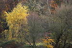 Autumn trees in Vale of Health on Hampstead Heath, London, England UK