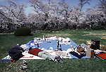 After a long day of viewing the blossoms and toasting sake and beer, two festival goers take a nap at the Cherry Blossom Festival held in Oyo Park near Hirosaki Castle in Aomori Prefecture in Northern Honshu, Japan. Over 1500 cherry trees come into bloom from late April to Early May. (Jim Bryant Photo)...