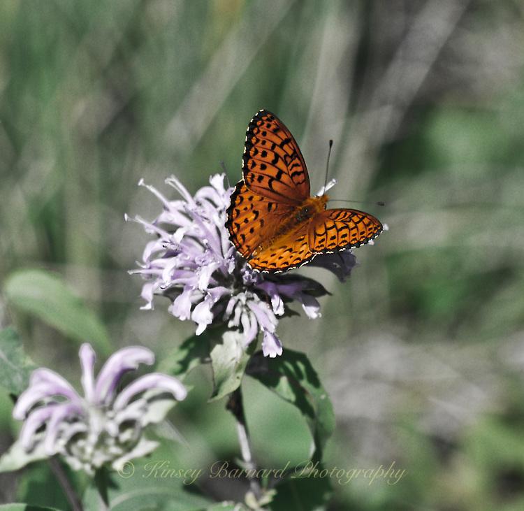 Butterfly taking it's fill from wildflowers