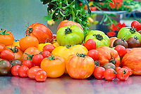 Tomatoes, variety of types, heirloom, striped, beefsteak, paste, plum, grape, cherry, yellow, gold, red, black, brown, green, ripe