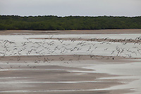 Salinas Praias<br /> <br /> Verão na Amazônia.<br /> <br /> Milhares de veranistas  de  cidades como Belém, Marabá e Tucuruí, entre outras,  buscam o  verão  nas praias de Salinópolis  nordeste do estado. <br /> Com uma população de 40.000 habitantes a cidade de Salinópolis recebeu este mês cerca de 280.000 visitantes <br /> De acordo com a segurança pública cerca de 400 homens da PM, bombeiros, Polícia civil  e Detran trabalham no atendimento de veranistas.<br /> Salinópolis, Pará, Brasil.<br /> Foto Paulo Santos/<br /> 27/07/2014