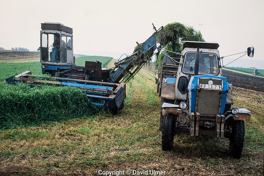 combine and tractor mow silage in East Germany, spring of 1990