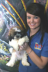 Shih-yzu puppy at the Pet Centre, Boyne Shopping Centre, Drogheda...Photo NEWSFILE/Jenny Matthews.(Photo credit should read Jenny Matthews/NEWSFILE)....This Picture has been sent you under the condtions enclosed by:.Newsfile Ltd..The Studio,.Millmount Abbey,.Drogheda,.Co Meath..Ireland..Tel: +353(0)41-9871240.Fax: +353(0)41-9871260.GSM: +353(0)86-2500958.email: pictures@newsfile.ie.www.newsfile.ie.FTP: 193.120.102.198.