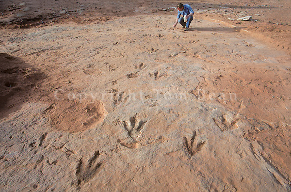 Paleontologist examins dinosaur tracks in Moenave Formation in the Painted Desert area of Ward Terrace, Navajo Indian Nation, Arizona, AGPix_0254 .