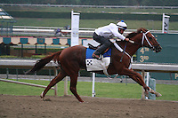 Smiling Tiger working for trainer Jeff Bonde at Santa Anita Park in Arcadia California