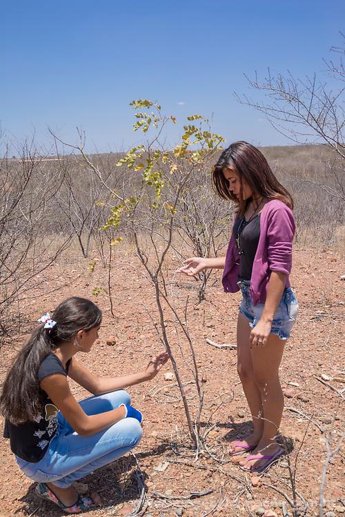 educa&ccedil;&atilde;o infantil e agroecol&oacute;gica em Tuparetama, Pernambuco<br /> Joseilda Ferreira de 16 anos e Camila Alves de 14 anos pesquisando plantas do Sert&atilde;o, Caatingueira , Pinh&atilde;o e Jurema