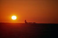 Tim Osmar sunset Unalakleet Western AK 1988 Iditarod