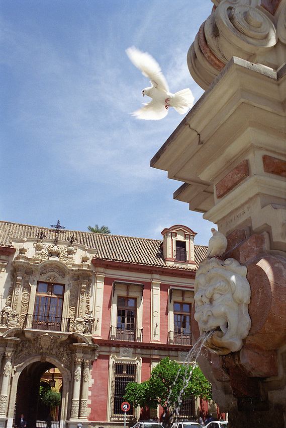 A white dove takes flight in the central square of Seville, Spain