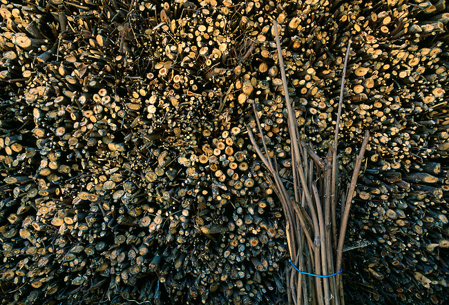 abstract of wood stacked neatly, Xiling Gorge, Three Gorges of the Yangtze River, rural China, Asia