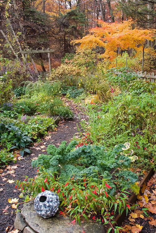 Kale Winterbor Begonia Million Kisses Romance Acer Palmatum