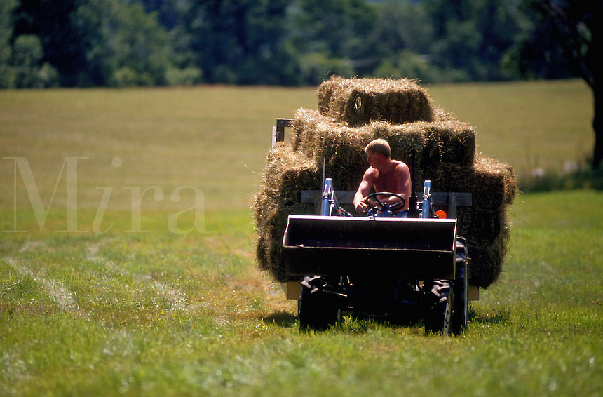 Farmer bringing in hay on a hay wagon.