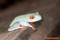 0306-0910  Red-eyed Tree Froglet (Young Frog), Agalychnis callidryas  © David Kuhn/Dwight Kuhn Photography.