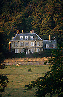 Cows graze in the early evening beneath the ha-ha of a country house against a backdrop of trees