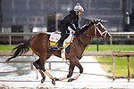 November 1, 2018: Axelrod, trained by Michael W. McCarthy, exercises in preparation for the Breeders' Cup Classic at Churchill Downs on November 1, 2018 in Louisville, Kentucky. Alex Evers/Eclipse Sportswire/CSM