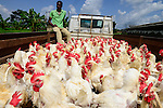 NIGERIA: global chicken